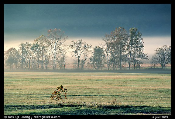 Meadow, trees, and fog, early morning, Cades Cove, Tennessee. Great Smoky Mountains National Park (color)