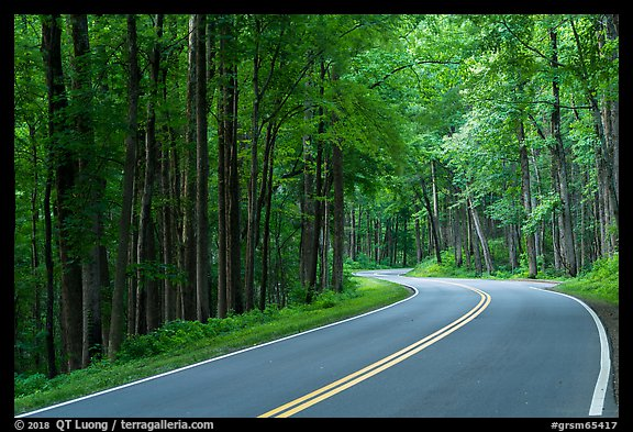Newfound Gap Road, Tennessee. Great Smoky Mountains National Park (color)