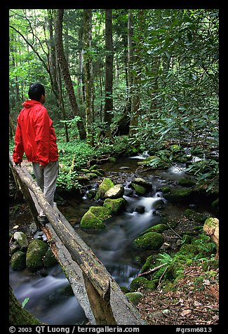 Hiker on tiny footbrige above stream, Tennessee. Great Smoky Mountains National Park (color)