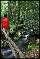 Hiker on tiny footbrige above stream, Tennessee. Great Smoky Mountains National Park, USA. (color)