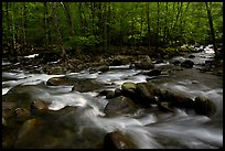 Confluence of the Middle Prong of the Little Pigeon River, Tennessee. Great Smoky Mountains National Park, USA.