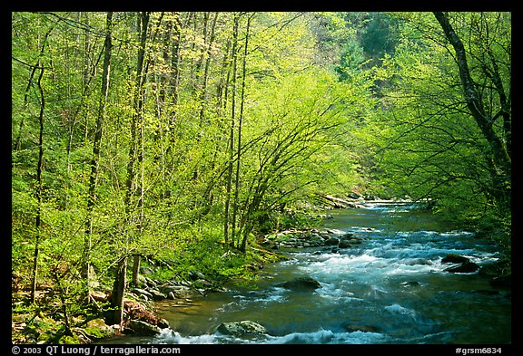 Middle Prong of the Little River in the sun, Tennessee. Great Smoky Mountains National Park (color)