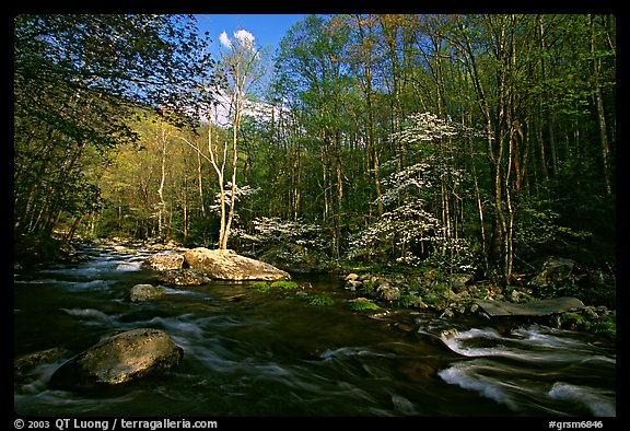 River and dogwoods, late afternoon sun, Middle Prong of the Little River, Tennessee. Great Smoky Mountains National Park (color)
