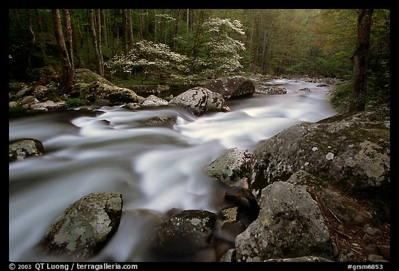 Middle Prong of the Little River flowing past dogwoods, Tennessee. Great Smoky Mountains National Park (color)