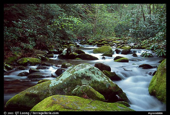 River cascading along mossy boulders, Roaring Fork, Tennessee. Great Smoky Mountains National Park (color)