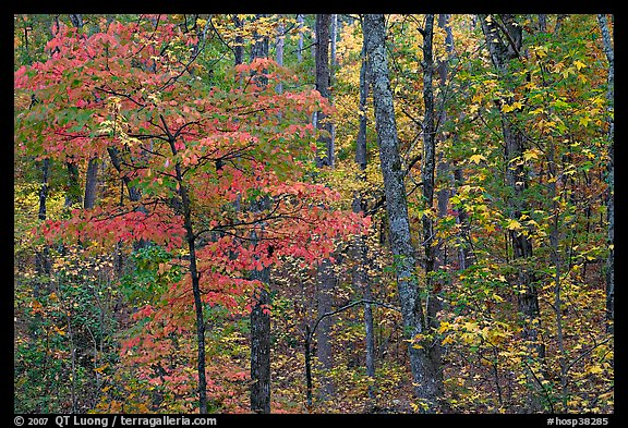 Trees in fall colors, West Mountain. Hot Springs National Park (color)