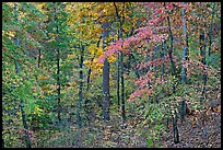 Forest in fall colors, West Mountain. Hot Springs National Park, Arkansas, USA. (color)