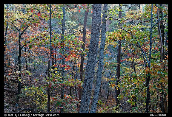 Forest in autumn colors, West Mountain. Hot Springs National Park (color)