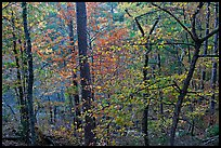Deciduous trees in fall colors, West Mountain. Hot Springs National Park, Arkansas, USA.