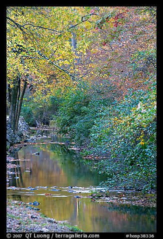 Stream and trees in fall colors, Gulpha Gorge. Hot Springs National Park (color)