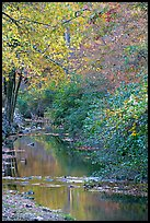 Stream and trees in fall colors, Gulpha Gorge. Hot Springs National Park, Arkansas, USA.