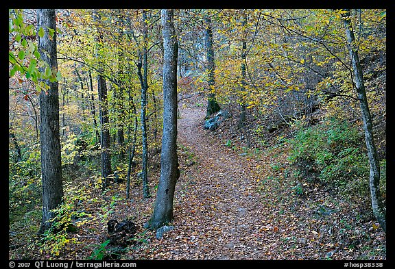 Trail and trees in fall colors, Gulpha Gorge. Hot Springs National Park (color)