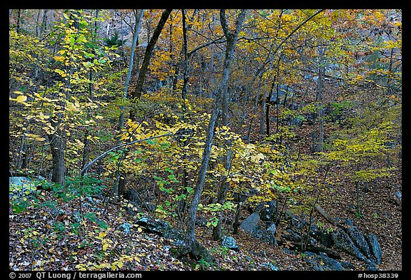 Trees in fall foliage, Gulpha Gorge. Hot Springs National Park (color)