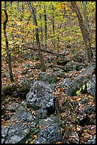 Boulders and trees in fall foliage, Gulpha Gorge. Hot Springs National Park, Arkansas, USA.