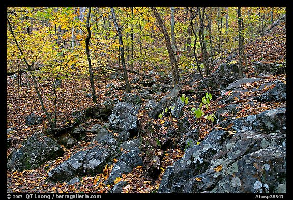 Boulders and trees in fall colors, Gulpha Gorge. Hot Springs National Park (color)