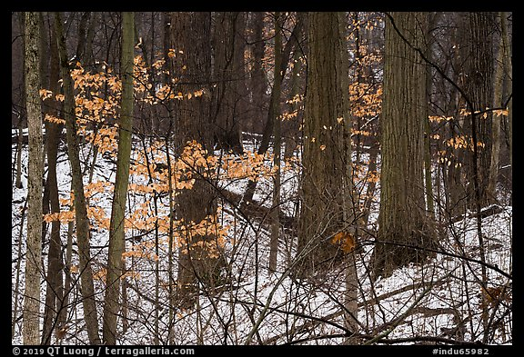 Picture/Photo: Forest in winter with leaves from previous season