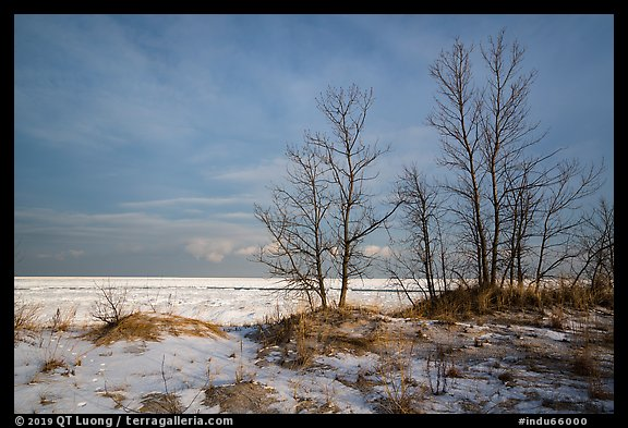 Dune grass, bare trees, and Lake Michigan. Indiana Dunes National Park (color)
