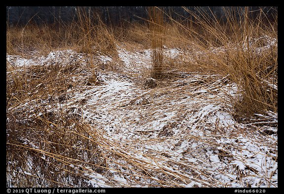 Grasses with fresh snow, Mnoke Prairie. Indiana Dunes National Park (color)