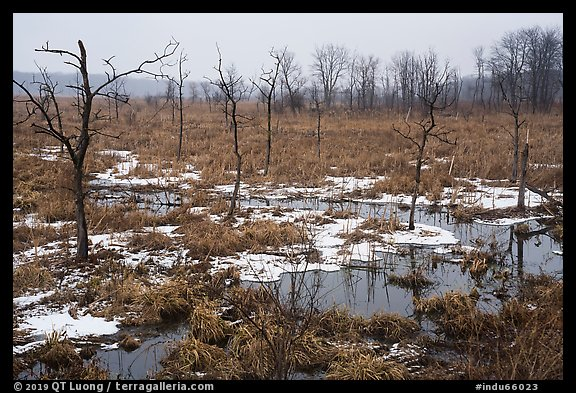 Cowles Bog in the rain, winter. Indiana Dunes National Park (color)