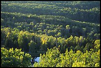 Forest seen  from Mount Franklin. Isle Royale National Park, Michigan, USA.