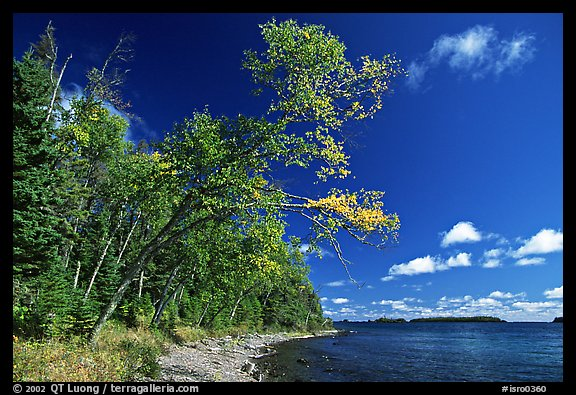 Poplar, coast on Rock Harbor trail. Isle Royale National Park (color)