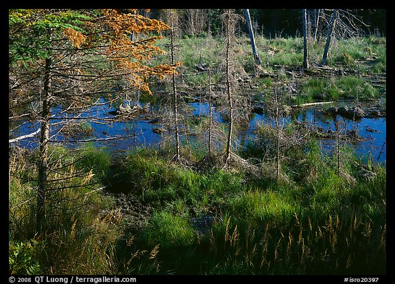 Beaver pond. Isle Royale National Park (color)