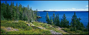 Lakeshore and trees. Isle Royale National Park (Panoramic color)