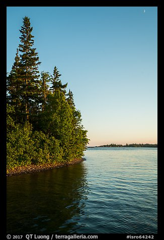 Trees growing at edge of water on Tookers Island. Isle Royale National Park (color)