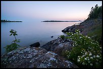 Summer wildflowers and islands, Rock Harbor, sunset. Isle Royale National Park ( color)