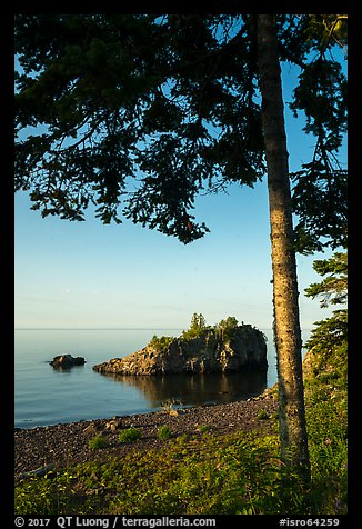 Tree, offshore islet, and Lake Superior, Mott Island. Isle Royale National Park (color)