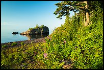 Wildflowers, offshore islet, and Lake Superior, Mott Island. Isle Royale National Park ( color)
