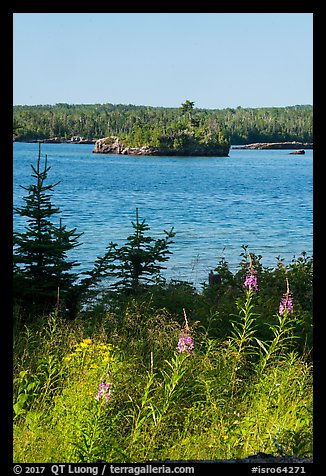 Fireweed, inlet, and forest, Caribou Island. Isle Royale National Park (color)