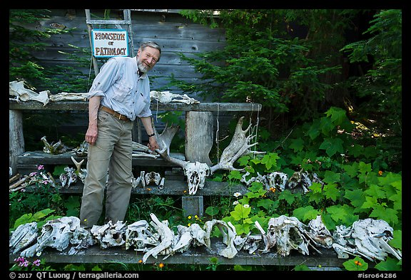 Rolf Peterson points to speciment of moose skull exhibiting pathology. Isle Royale National Park (color)