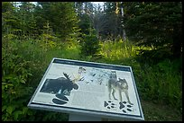 Moose and wolves interpretive sign. Isle Royale National Park ( color)