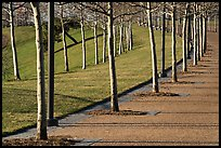 Rosehill Ash monoculture lining up curved pathways in winter. Gateway Arch National Park ( color)