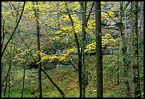 Trees and limestome cliffs in autumn. Mammoth Cave National Park, Kentucky, USA.