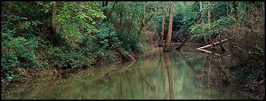 Spring forest scene with trees reflected in pond. Mammoth Cave National Park (Panoramic color)