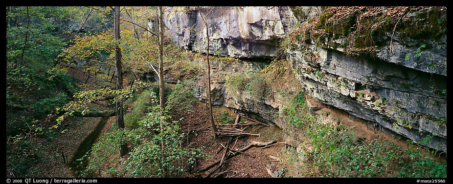 Limestone cliffs and forest. Mammoth Cave National Park (color)