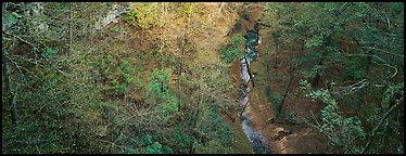 Forest and stream seen from above. Mammoth Cave National Park (Panoramic color)