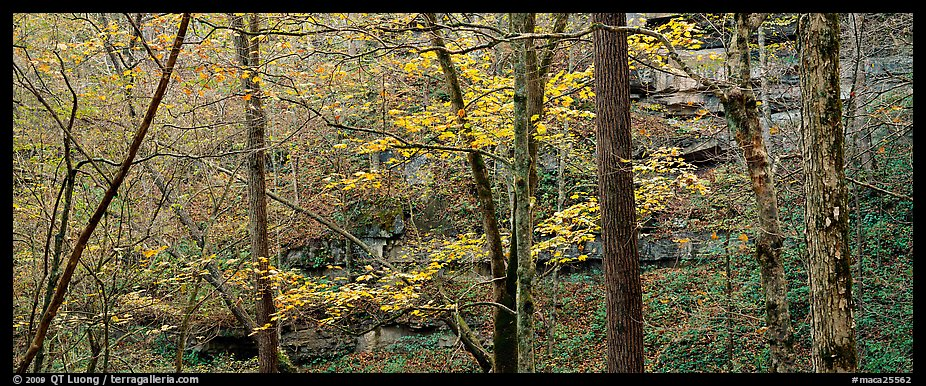 Forest in autumn and cliffs. Mammoth Cave National Park (color)