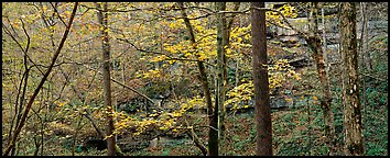Forest in autumn and cliffs. Mammoth Cave National Park (Panoramic color)