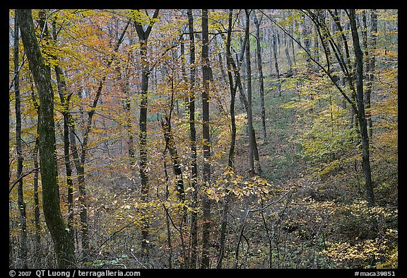 Forest in fall color. Mammoth Cave National Park, Kentucky, USA.