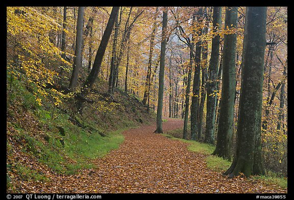 Trail covered with fallen leaves. Mammoth Cave National Park (color)
