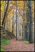 Trail in autumn forest. Mammoth Cave National Park, Kentucky, USA.