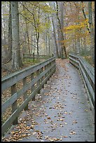 Wooden boardwalk in autumn. Mammoth Cave National Park ( color)