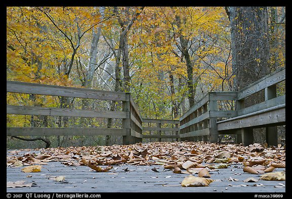 Fallen leaves and boardwalk, ground-level view. Mammoth Cave National Park, Kentucky, USA.