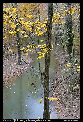 Trees with yellow leaves and Styx river during rain. Mammoth Cave National Park (color)