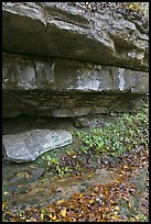 Limestone slabs and overhangs. Mammoth Cave National Park ( color)