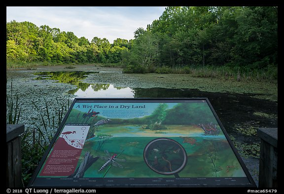 Wet place in a dry land Interpretive sign, Sloans Crossing Pond. Mammoth Cave National Park (color)
