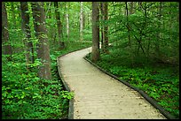 Boardwalk, Sloans Crossing Pond. Mammoth Cave National Park ( color)